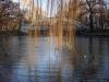 reportaz_most_zelbetowy_w_parku_centralnym_017