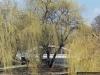 reportaz_most_zelbetowy_w_parku_centralnym_024
