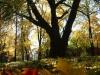 reportaz_platan_klonolistny_pomnik_przyrody_w_parku_mlodziezowym_w_swidnicy_003