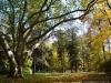 reportaz_platan_klonolistny_pomnik_przyrody_w_parku_mlodziezowym_w_swidnicy_007