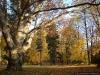 reportaz_platan_klonolistny_pomnik_przyrody_w_parku_mlodziezowym_w_swidnicy_008
