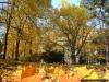 reportaz_platan_klonolistny_pomnik_przyrody_w_parku_mlodziezowym_w_swidnicy_012