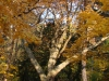 reportaz_platan_klonolistny_pomnik_przyrody_w_parku_mlodziezowym_w_swidnicy_014
