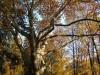 reportaz_platan_klonolistny_pomnik_przyrody_w_parku_mlodziezowym_w_swidnicy_015