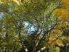 reportaz_platan_klonolistny_pomnik_przyrody_w_parku_mlodziezowym_w_swidnicy_016