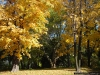 reportaz_platan_klonolistny_pomnik_przyrody_w_parku_mlodziezowym_w_swidnicy_017