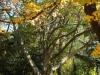 reportaz_platan_klonolistny_pomnik_przyrody_w_parku_mlodziezowym_w_swidnicy_018