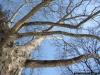 reportaz_platan_klonolistny_pomnik_przyrody_w_parku_mlodziezowym_w_swidnicy_020