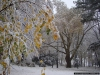 reportaz_platan_klonolistny_pomnik_przyrody_w_parku_mlodziezowym_w_swidnicy_029