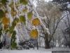 reportaz_platan_klonolistny_pomnik_przyrody_w_parku_mlodziezowym_w_swidnicy_030
