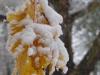 reportaz_platan_klonolistny_pomnik_przyrody_w_parku_mlodziezowym_w_swidnicy_032
