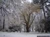 reportaz_platan_klonolistny_pomnik_przyrody_w_parku_mlodziezowym_w_swidnicy_033