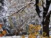 reportaz_platan_klonolistny_pomnik_przyrody_w_parku_mlodziezowym_w_swidnicy_034