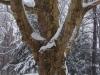 reportaz_platan_klonolistny_pomnik_przyrody_w_parku_mlodziezowym_w_swidnicy_035