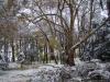 reportaz_platan_klonolistny_pomnik_przyrody_w_parku_mlodziezowym_w_swidnicy_036