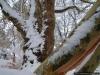reportaz_platan_klonolistny_pomnik_przyrody_w_parku_mlodziezowym_w_swidnicy_037