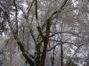 reportaz_platan_klonolistny_pomnik_przyrody_w_parku_mlodziezowym_w_swidnicy_038