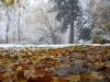 reportaz_platan_klonolistny_pomnik_przyrody_w_parku_mlodziezowym_w_swidnicy_039