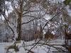 reportaz_platan_klonolistny_pomnik_przyrody_w_parku_mlodziezowym_w_swidnicy_040