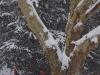 reportaz_platan_klonolistny_pomnik_przyrody_w_parku_mlodziezowym_w_swidnicy_042