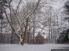 reportaz_platan_klonolistny_pomnik_przyrody_w_parku_mlodziezowym_w_swidnicy_043