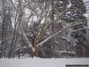 reportaz_platan_klonolistny_pomnik_przyrody_w_parku_mlodziezowym_w_swidnicy_044