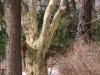reportaz_platan_klonolistny_pomnik_przyrody_w_parku_mlodziezowym_w_swidnicy_048
