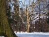 reportaz_platan_klonolistny_pomnik_przyrody_w_parku_mlodziezowym_w_swidnicy_049
