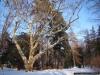 reportaz_platan_klonolistny_pomnik_przyrody_w_parku_mlodziezowym_w_swidnicy_055