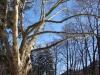 reportaz_platan_klonolistny_pomnik_przyrody_w_parku_mlodziezowym_w_swidnicy_059