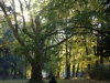reportaz_platan_klonolistny_pomnik_przyrody_w_parku_mlodziezowym_w_swidnicy_062