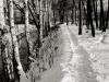 sw_po_45_park_centralny_044