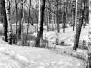 sw_po_45_park_centralny_046