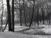sw_po_45_park_centralny_102
