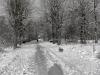 sw_po_45_park_centralny_104