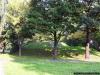 sw_po_99_park_centralny_004