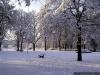 sw_po_99_park_centralny_029
